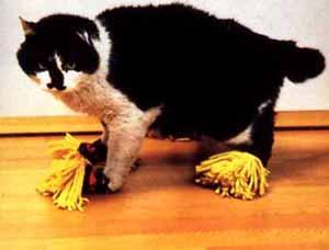 duster-cat.jpg
