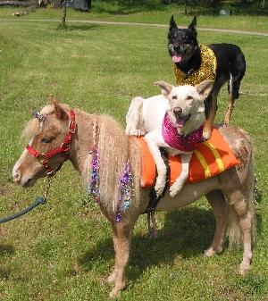 dog_and_pony_show.jpg