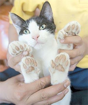 cat_digits.jpg