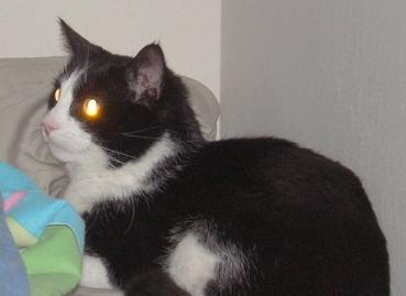 cheneys_cat.jpg
