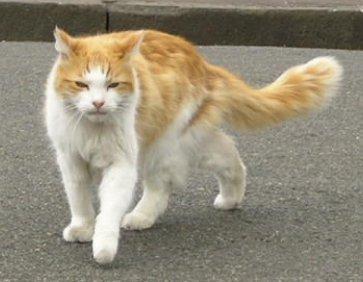 innocent_cat.JPG