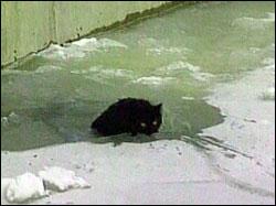 plucky_cat.jpg