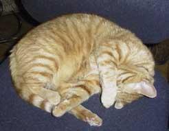 boring_cat.jpg