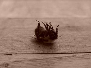 dead_bee.jpg