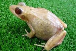 transparent_frog.jpg