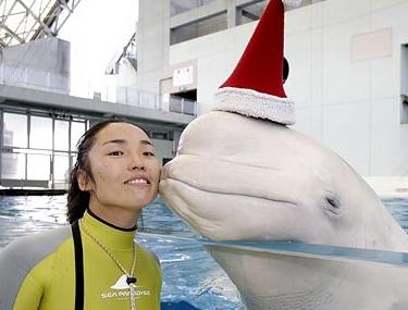 christmas_whale.jpg