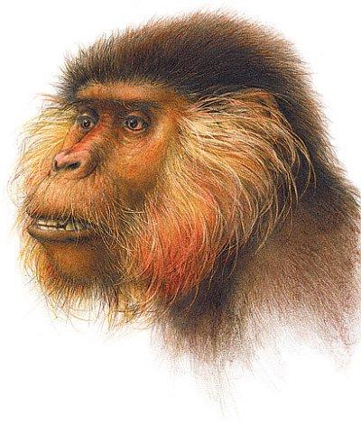 Proconsul-africanus