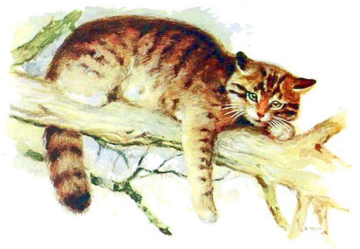 cat-fox